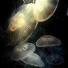 Jellyfish Darkness to Light by RichCaspian