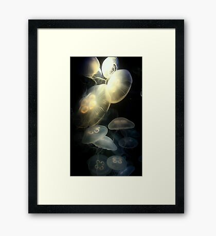 Jellyfish Darkness to Light Framed Print