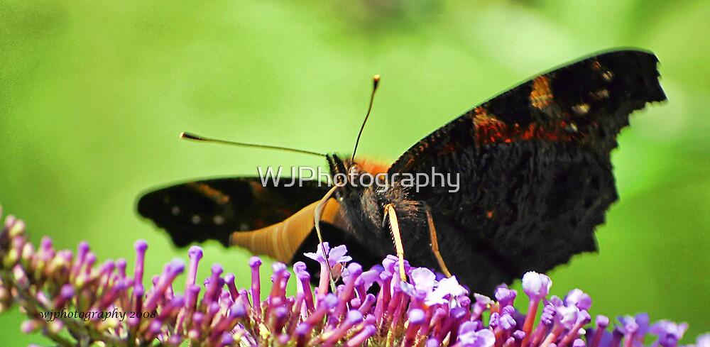 Butterfly Eye by WJPhotography