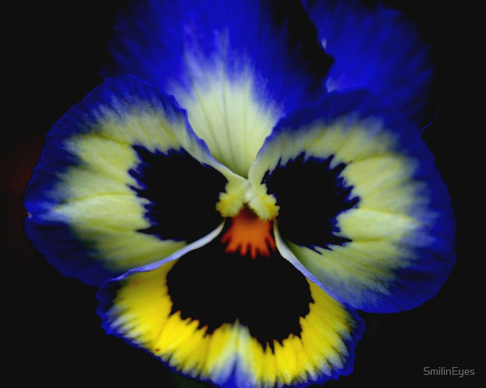 Bold Pansy by SmilinEyes