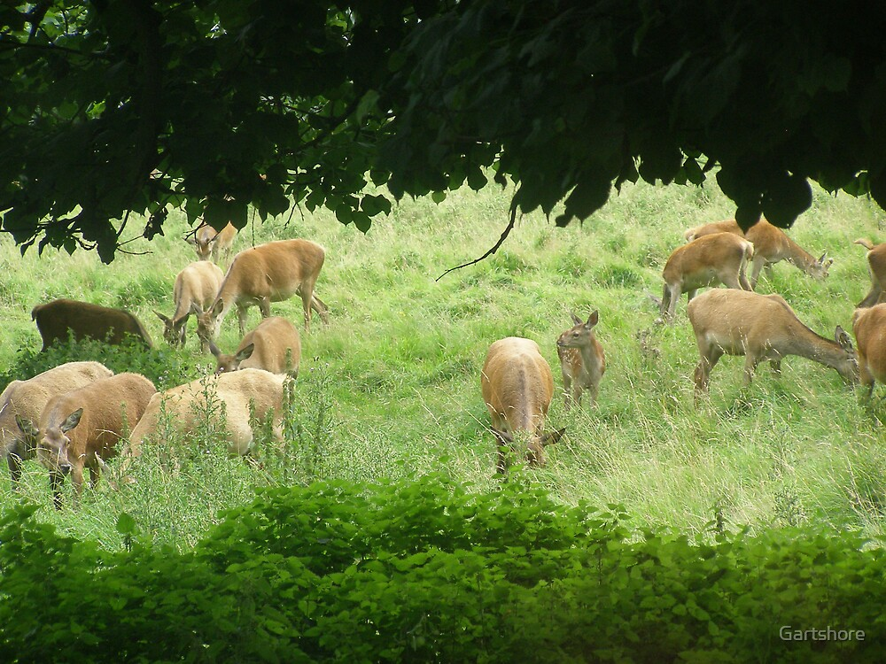Deer park by Gartshore