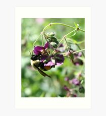 Bumble Bee With Pollen Art Print