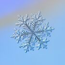Real snowflake - Hyperion by Alexey Kljatov