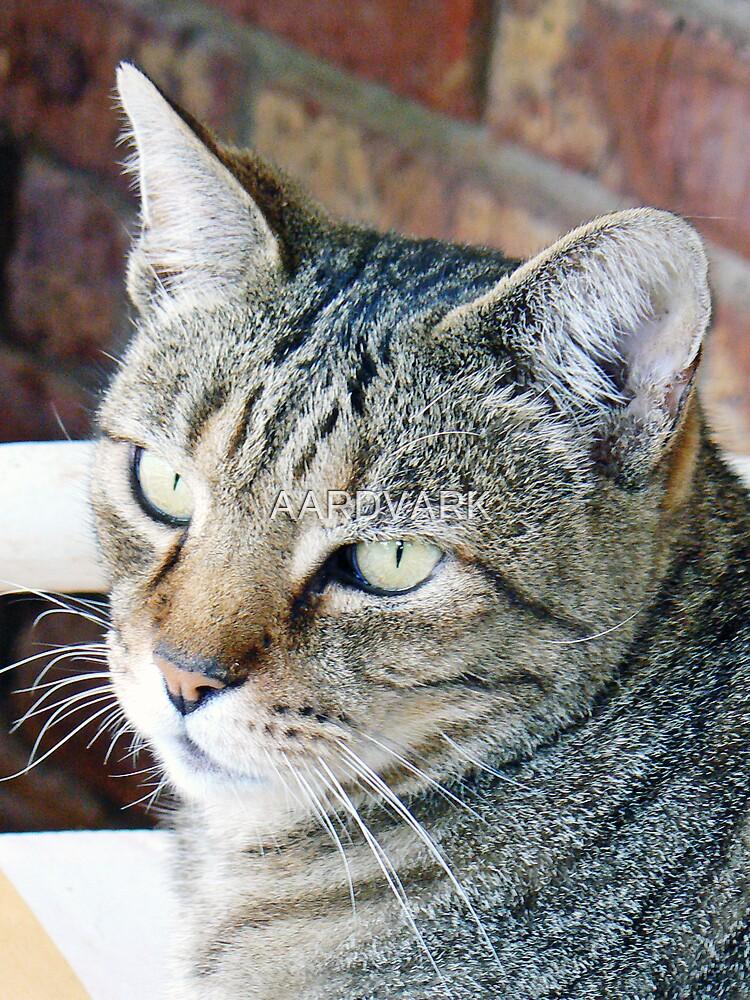 Buggi Cat by AARDVARK