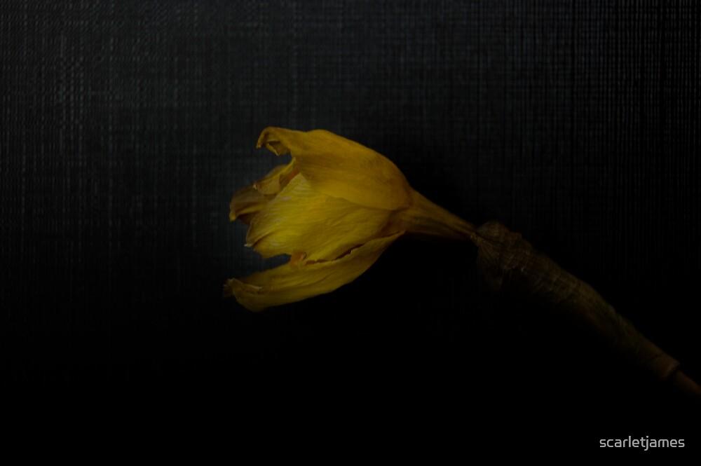 Daff by scarletjames