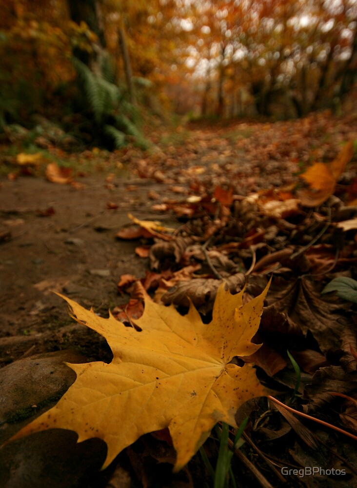 Leafy stroll by GregBPhotos