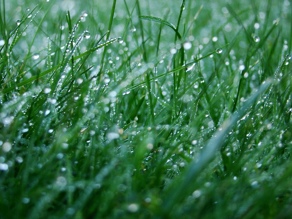 dew grass bokeh by alexsk