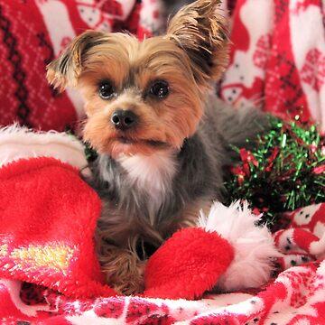 Waiting for Santa by chihuahuashower
