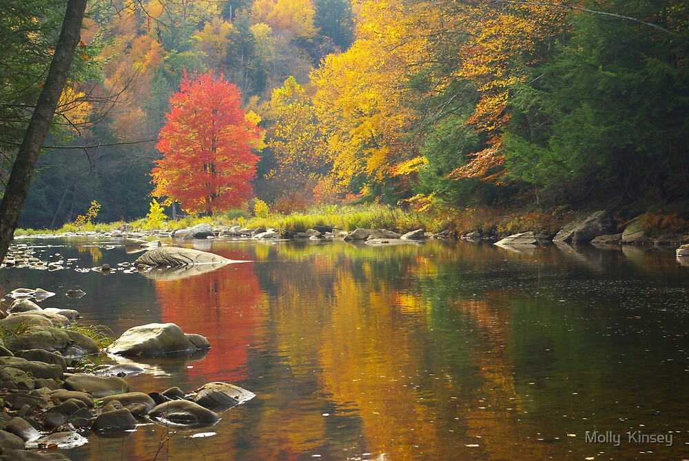 Loyalsock Reflection by Molly  Kinsey