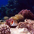 Beautiful Sealife 1 by hurmerinta