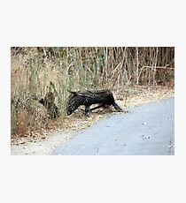 """Does this remind you of   """"Eeyore""""? Photographic Print"""