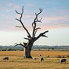 Mundon Oak (I) by DonMc