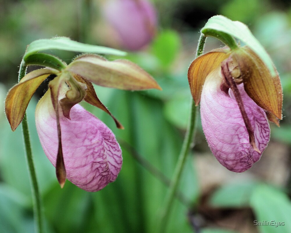 Pretty Pink Lady Slippers by SmilinEyes
