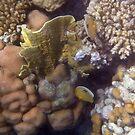 Beautiful Sealife 2 by hurmerinta
