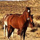 Palomino Valley Wilds by SB  Sullivan