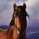 Palomino Valley Wild Horses by SB  Sullivan