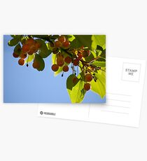 Crabapples Postcards