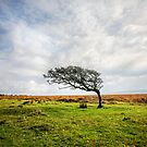 Windswept Tree by Dave Hare