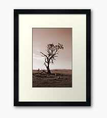 Lonely old Paddock Tree Framed Print