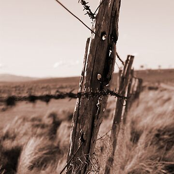 Barbed Fence by outafocus