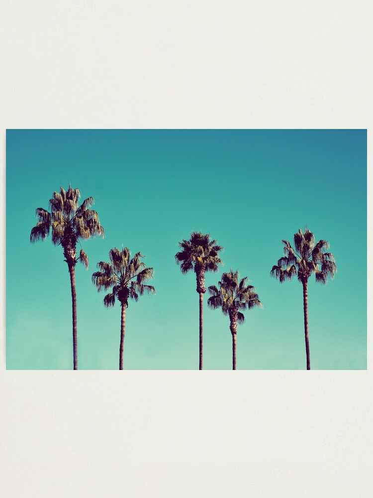Alternate view of California Palm Trees Photographic Print