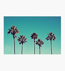 California Palm Trees Photographic Print