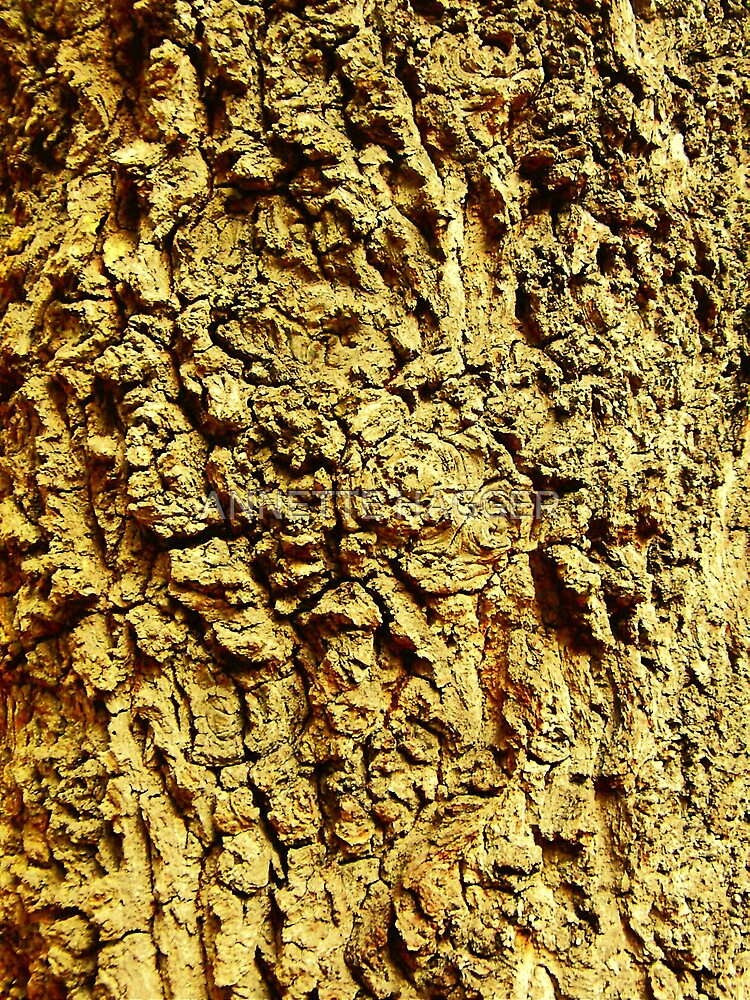 CLOSE UP OF BARK- PORINGLAND WOOD, NORFOLK by ANNETTE HAGGER