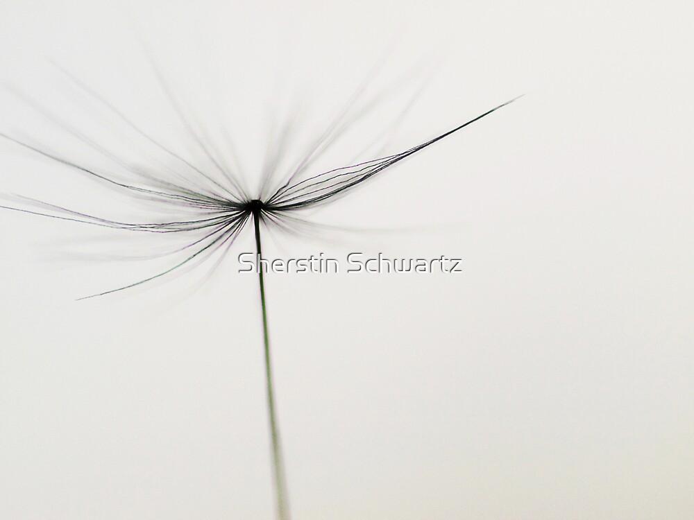Void.  by Sherstin Schwartz
