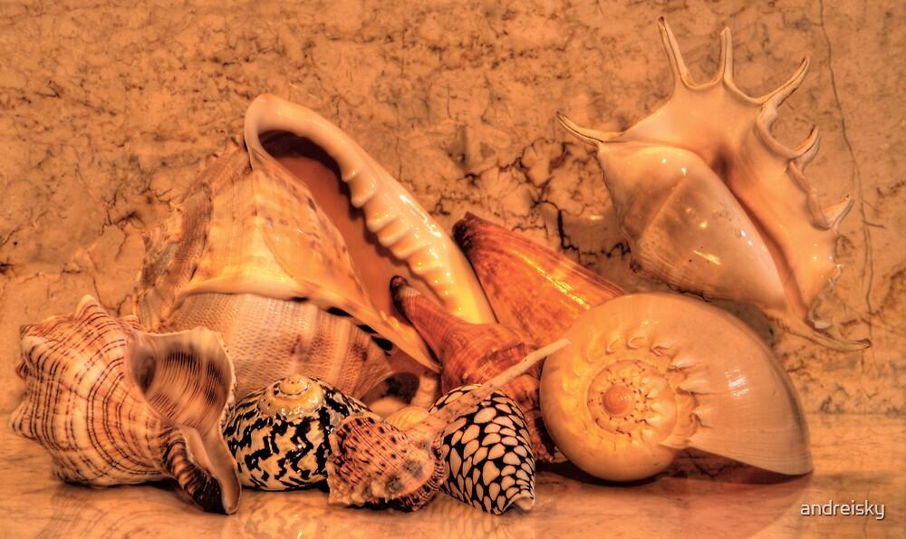 Shells XV by andreisky