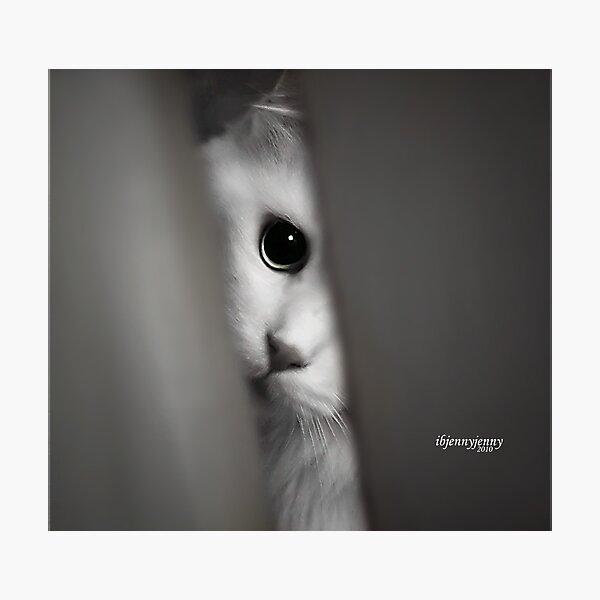 Peepin TomCat Photographic Print