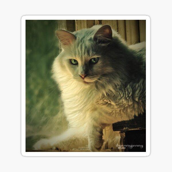 I'm only a cat Sticker
