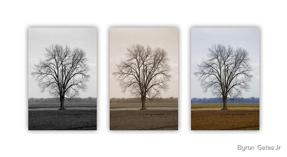 Untitled.00218 by Byron  Gates Jr