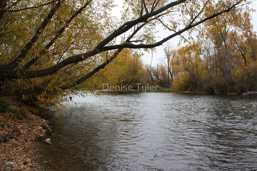 Boise River in the fall by Denise Tyler