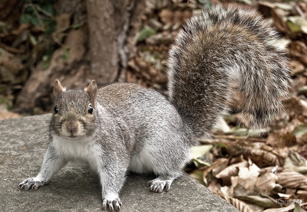 Syd the Squirrel by KarenM