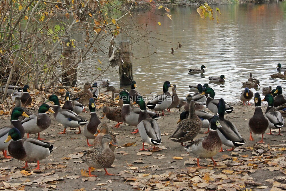 Ohhh the Ducks!!! by Denise Tyler