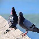 Pigeon by Henrik Lehnerer