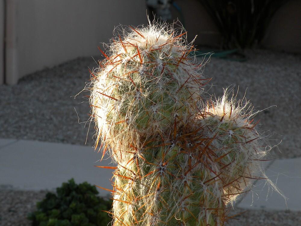 Cactus at dusk by Bonnie Pelton