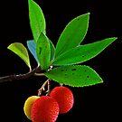 3 Berries by jerry  alcantara