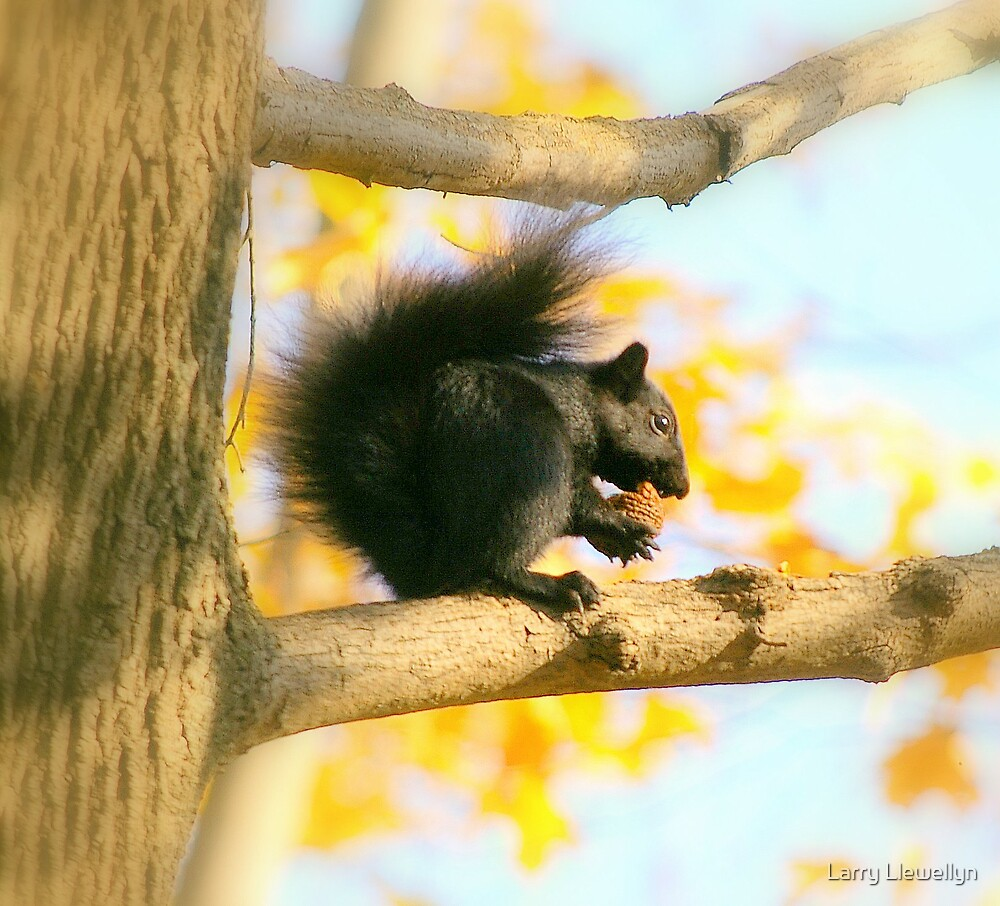 Awe Nuts Again.......! by Larry Llewellyn