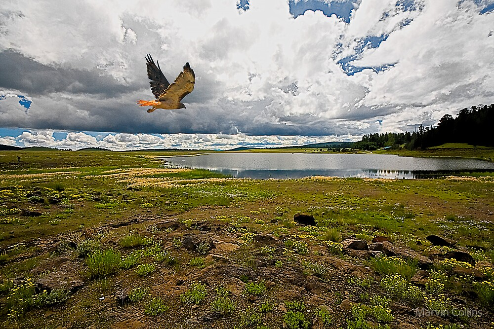 Northern Arizona by Marvin Collins