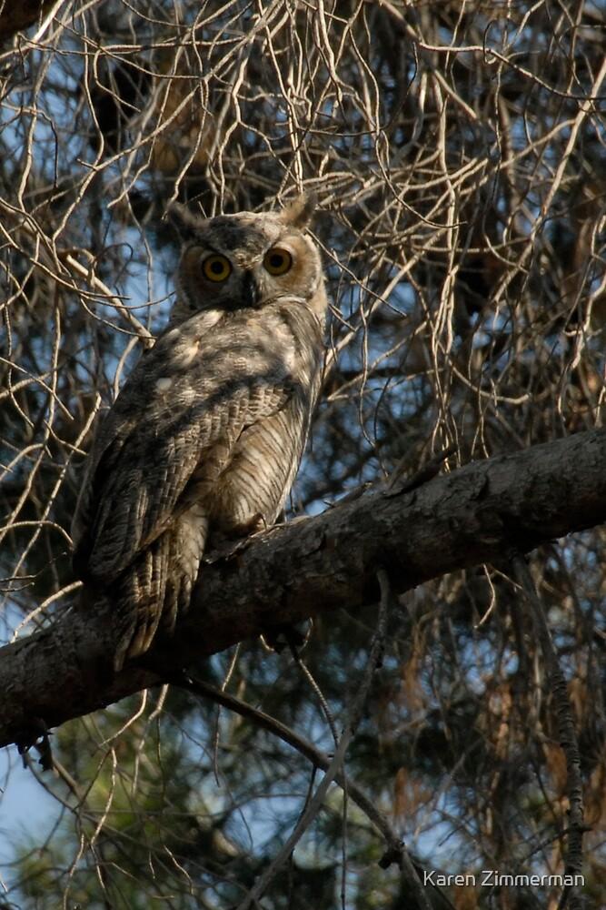 Great Horned Owl by Karen Zimmerman