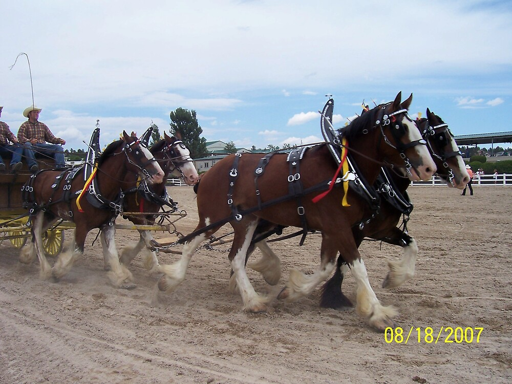 Clydesdales at the Parker Show by HungarianGypsy