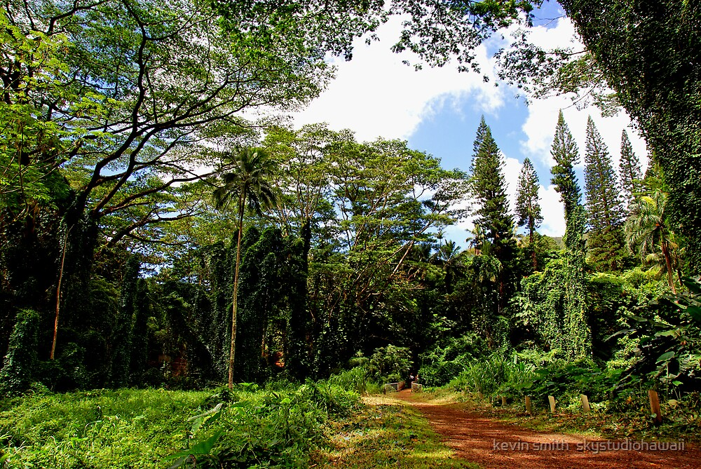 Manoa Falls Trailhead by kevin smith  skystudiohawaii