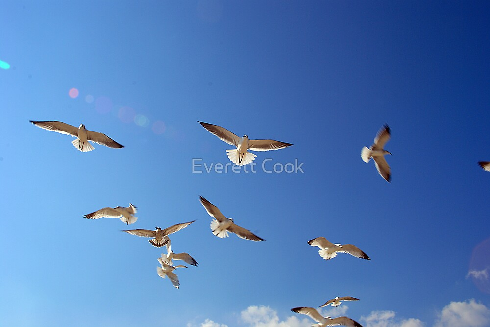 flight by Everett Cook