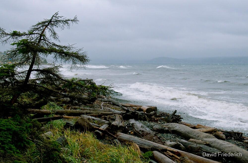 Grey Day on the Beach by David Friederich