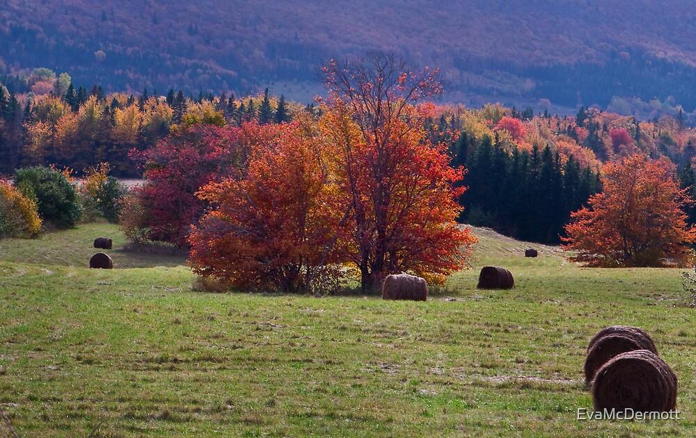 Rolls of Hay by EvaMcDermott