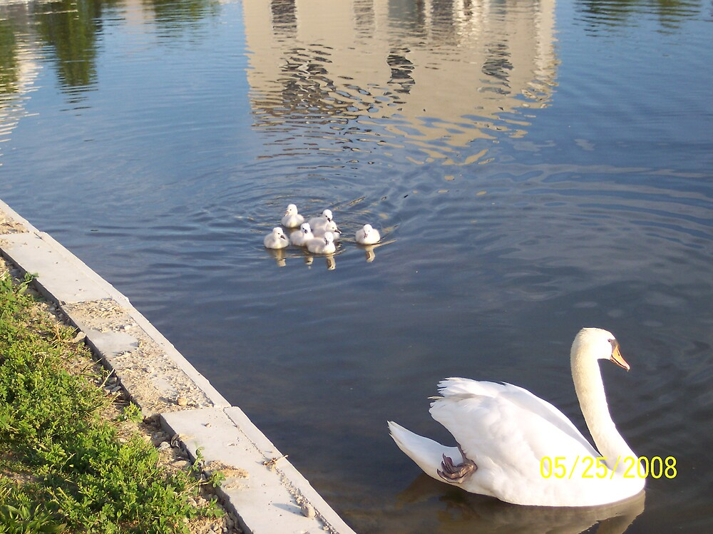 swans 3 by phyllis Neff Garrett
