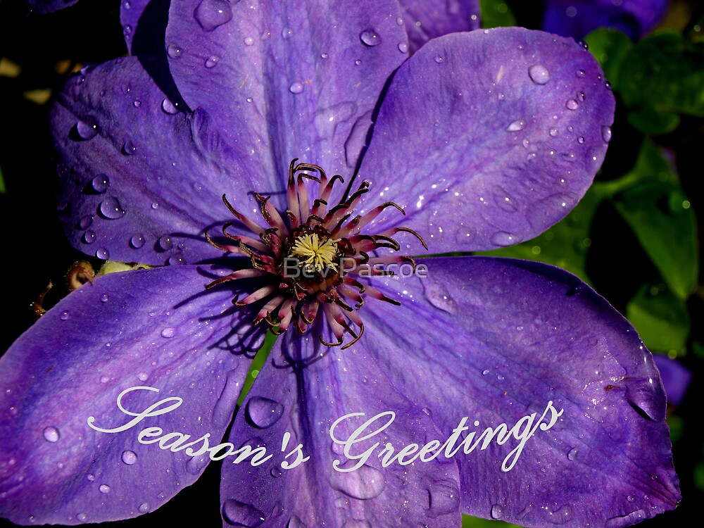 Clematis - Seasons Greetings by Bev Pascoe