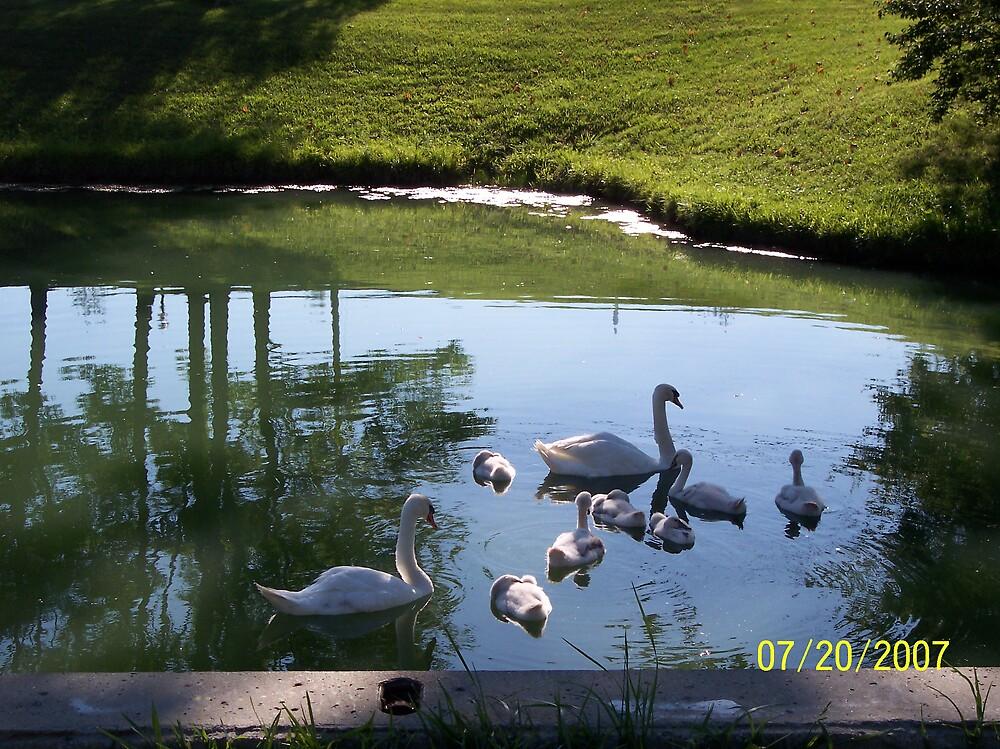 SWANS 23 by phyllis Neff Garrett