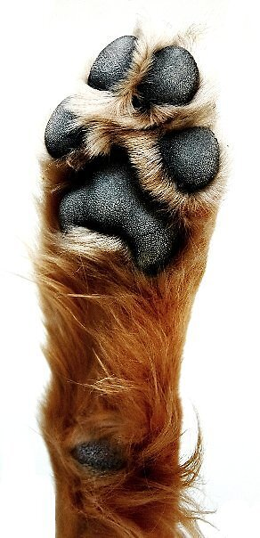 dogflower by clare scott